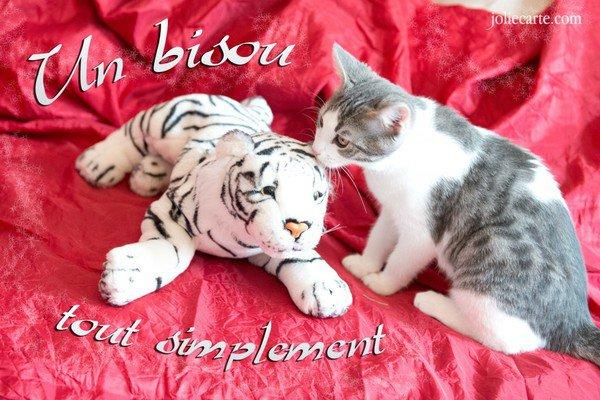 http://photo.ma-bimbo.com/fr/24/11792/moy/9433331.jpg