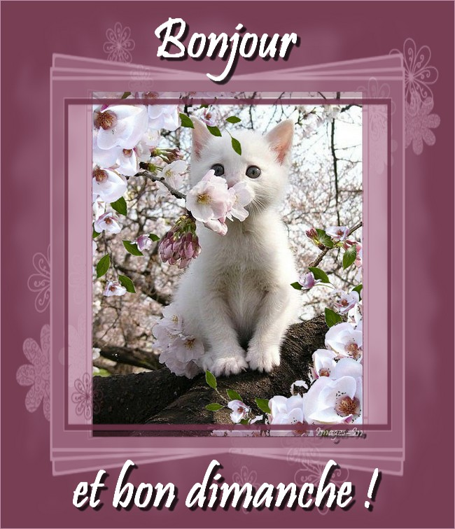 http://photo.ma-bimbo.com/fr/27/13200/moy/10559531.jpg