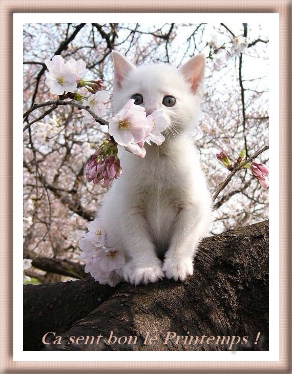 http://photo.ma-bimbo.com/fr/27/13209/moy/10566530.jpg