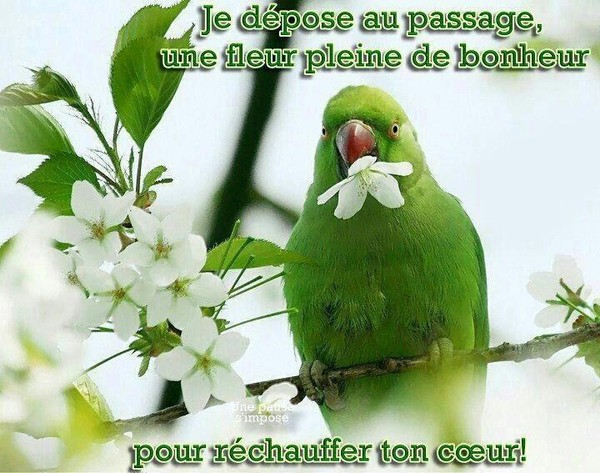 http://photo.ma-bimbo.com/fr/27/13231/moy/10584070.jpg