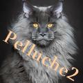 Pelluche2